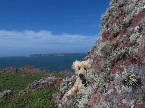 Looking across to Skomer, Dream Island.